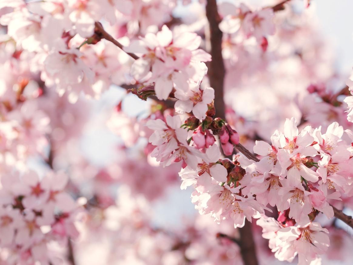 Copaci înfloriți și roade – Alexandru Fintoiu