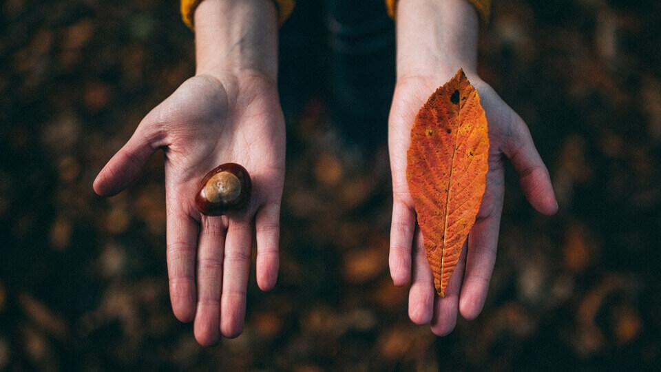 Devotional – Marcatorii unei inimi desavarsite