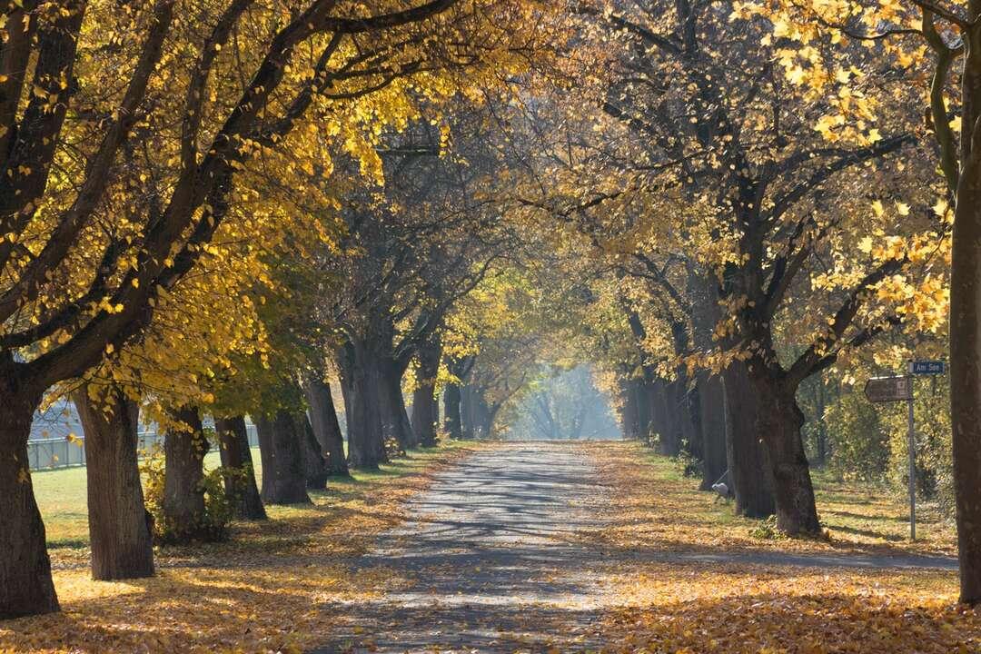 când_drumul_e_galben_și_copacii_luminează
